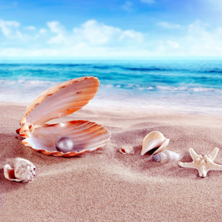 Shells and pearl Picture for 1024x1024