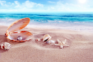 Shells and pearl Background for Android, iPhone and iPad