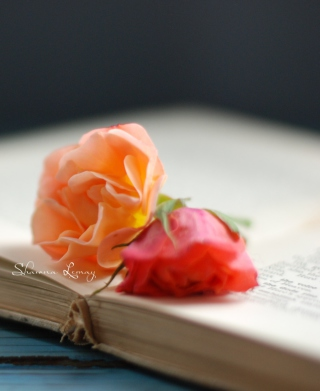 Book Of Roses Background for Nokia C5-06