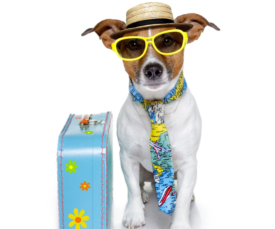 Funny dog going on holiday wallpaper 960x800