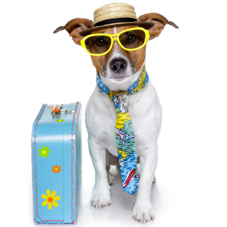 Funny dog going on holiday sfondi gratuiti per 1024x1024