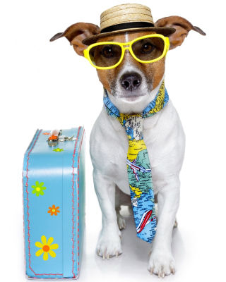 Funny dog going on holiday Background for Nokia Asha 306