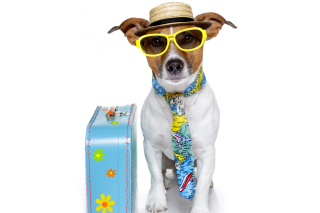 Funny dog going on holiday papel de parede para celular para Nokia Asha 201