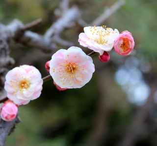 Blooming Apple Tree - Fondos de pantalla gratis para iPad 2
