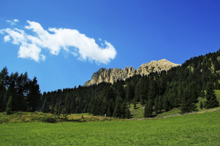 Summer Day in Forest Mountains - Obrázkek zdarma