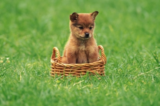 Puppy In Basket Background for Android, iPhone and iPad