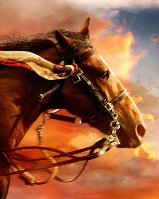 Horse HD Background for Nokia C1-01