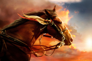 Horse HD Wallpaper for Android, iPhone and iPad