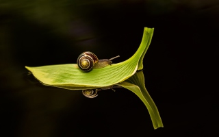 Snail On Leaf Background for Android, iPhone and iPad