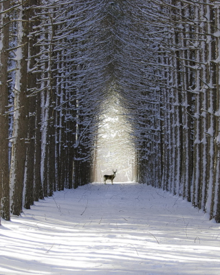 Spruce Winter Alley sfondi gratuiti per iPhone 4S