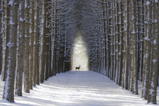 Spruce Winter Alley Background for Android, iPhone and iPad