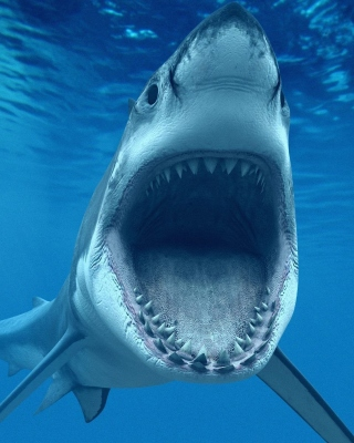 Great White Sharks Background for HTC Titan
