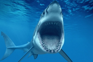 Free Great White Sharks Picture for Samsung P1000 Galaxy Tab
