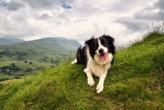 Free Happy Dog On Green Hill Picture for Desktop Netbook 1024x600