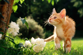 Sweet Cat Picture for Fullscreen Desktop 1024x768