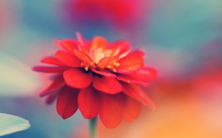 Single Red Flower - Fondos de pantalla gratis para 176x144