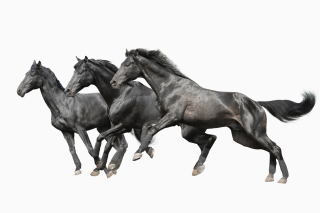 Black horses Background for Android, iPhone and iPad