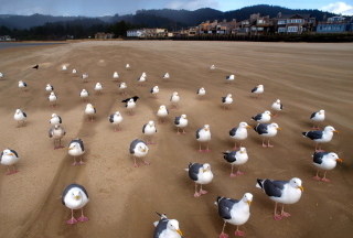 Free Seagull Beach Picture for Android, iPhone and iPad