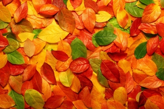 Macro Autumn Leaf Wallpaper for Android, iPhone and iPad