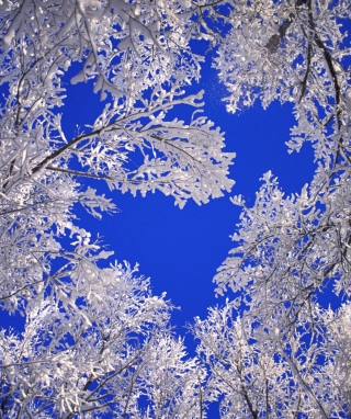 Free Frosted Trees In Colorado Picture for HTC Titan