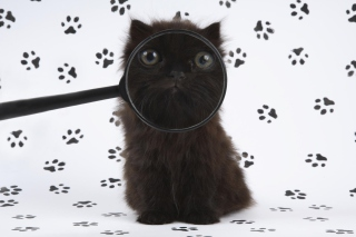 Cat And Magnifying Glass - Fondos de pantalla gratis