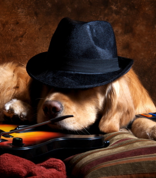 Dog In Hat - Fondos de pantalla gratis para iPhone SE