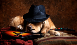 Dog In Hat Background for Android, iPhone and iPad
