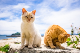 Free Summer Cats Picture for Desktop 1280x720 HDTV