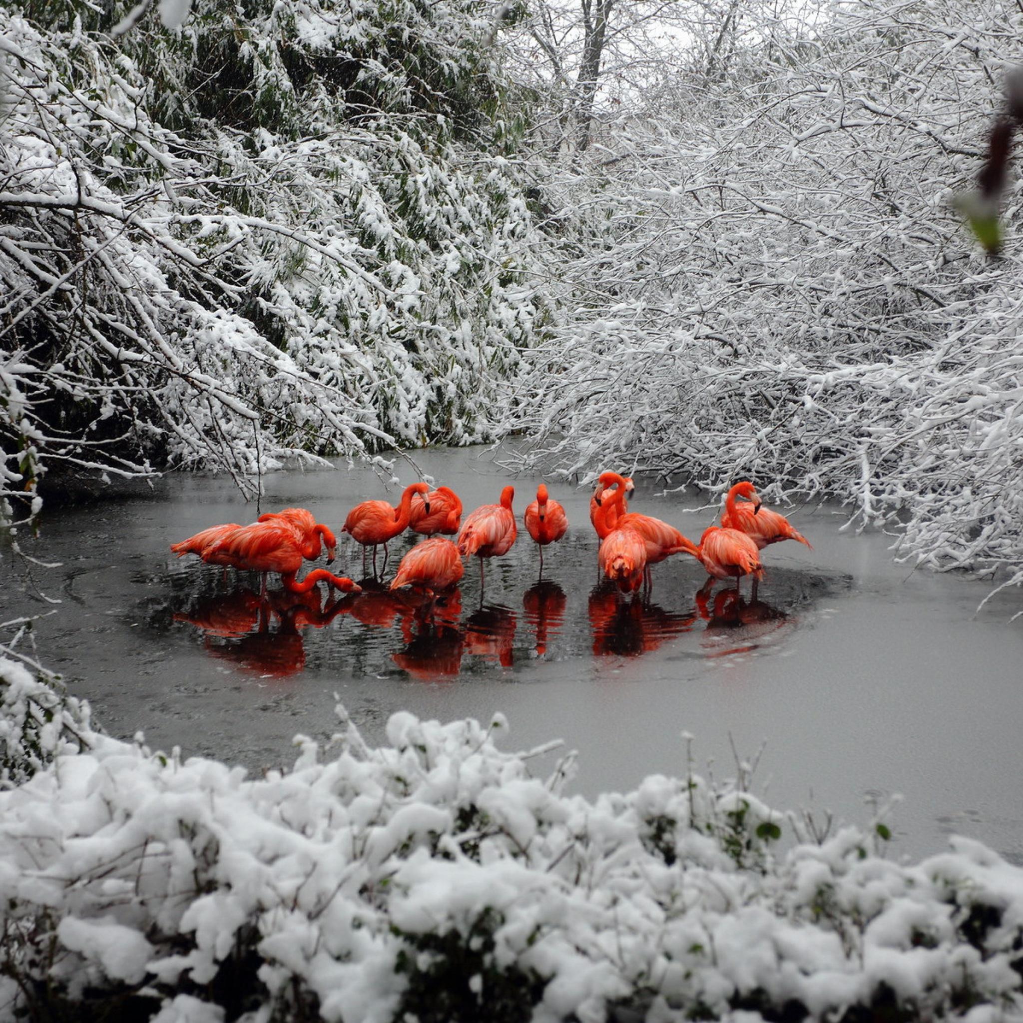 природа животные птицы деревья зима снег бесплатно