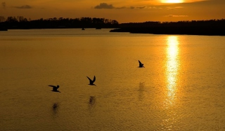 Free Birds, Lake And Sunset Picture for Android, iPhone and iPad