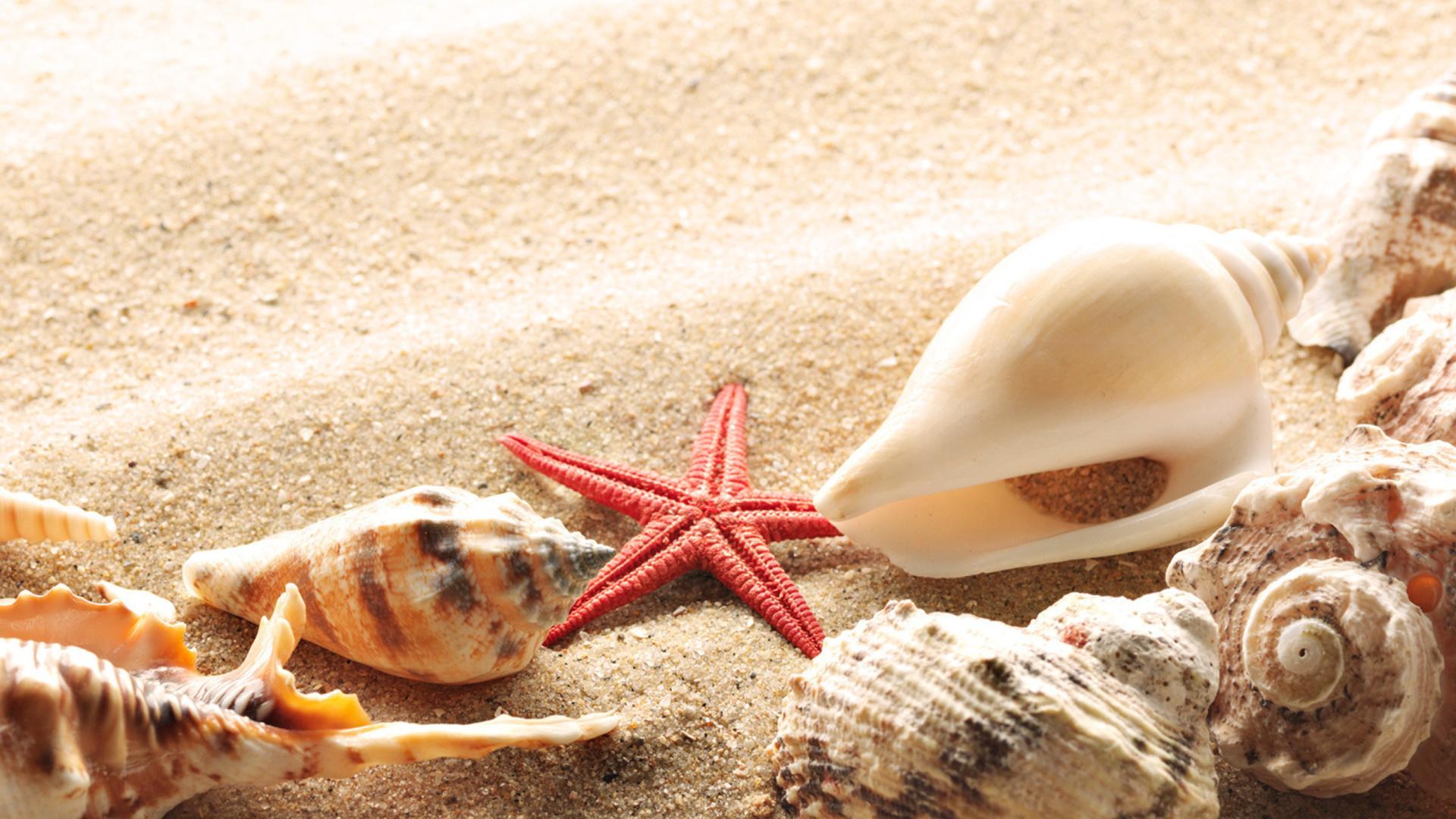 Морская звезда в песке без регистрации
