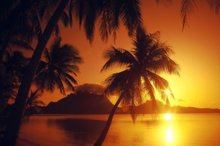 Free Palms At Sunset Picture for Android, iPhone and iPad