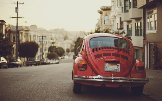 Red Beetle Picture for Android, iPhone and iPad