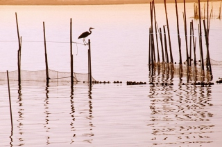 La Albufera National Park Picture for Android, iPhone and iPad