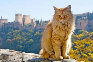 Cat in Granada, Andalusia Background for Android, iPhone and iPad