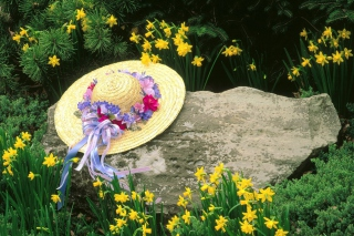 Hat Among Yellow Flowers Picture for Android, iPhone and iPad