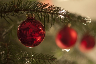 Red Balls On Christmas Tree sfondi gratuiti per cellulari Android, iPhone, iPad e desktop