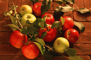Free Fresh Autumn Apples Picture for Android, iPhone and iPad