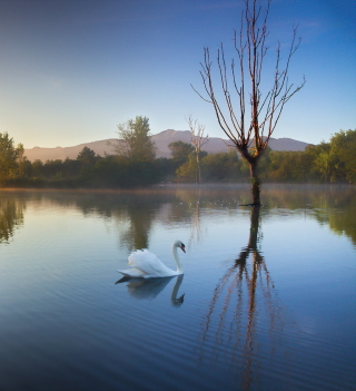 White Swan On Lake sfondi gratuiti per iPad mini