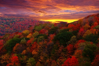 Kostenloses Autumn Forest At Sunset Wallpaper für Android, iPhone und iPad