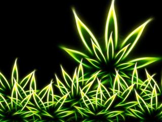 Marijuana para Nokia Asha 201