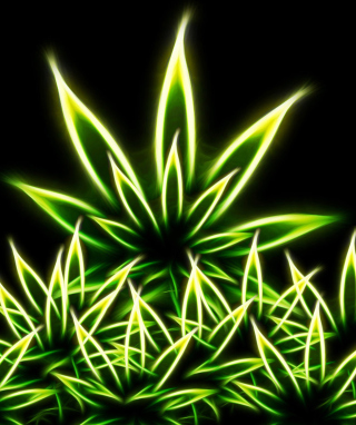 Marijuana Background for Nokia Asha 305