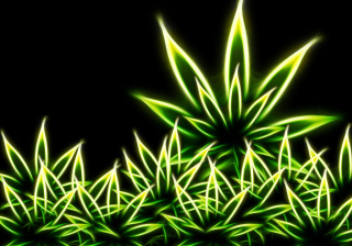 Marijuana Background for 640x480