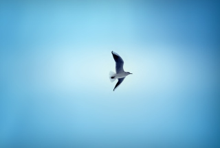 Bird In Blue Sky sfondi gratuiti per cellulari Android, iPhone, iPad e desktop