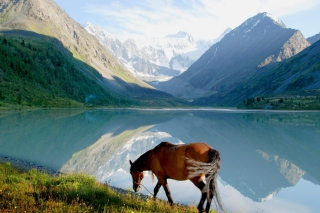 Mountains Lake Horse Wallpaper for Android, iPhone and iPad