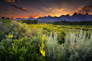 Wyoming National Park In Usa Picture for Android, iPhone and iPad