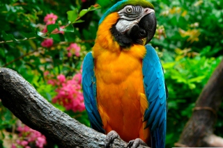 Amazing Parrot Picture for Android, iPhone and iPad