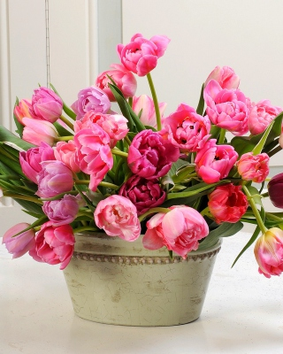 Bouquet of Tulips Background for 240x320