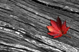 Little Red Leaf Picture for Android, iPhone and iPad