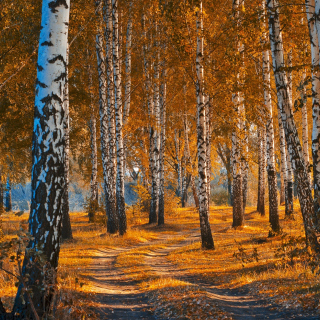 Free Autumn Forest in October Picture for 208x208